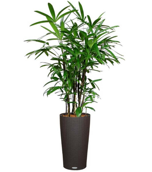 7 Air Purifying Plants For A Brown Thumb